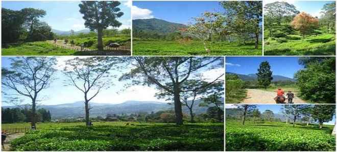 Jawa Barat Laman 2 Tempat Wisata Indonesia Agrowisata Gunung Mas