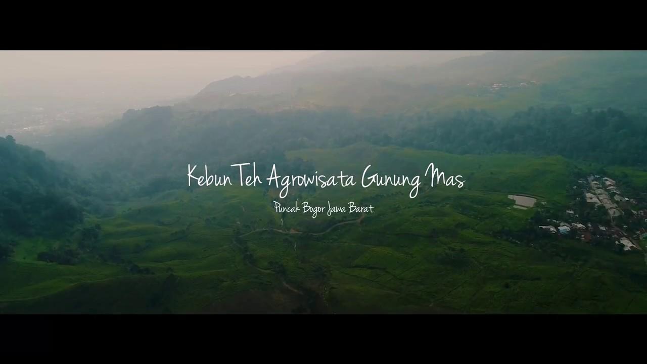 Keindahan Alam Indonesia Kebun Teh Agrowisata Gunung Mas Puncak Bogor