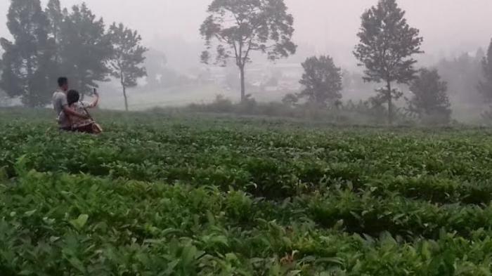 Kisah Pemilik Warung Agro Wisata Gunung Mas Dulunya Jadi Pemetik