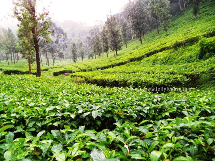 Menikmati Kesejukan Puncak Agrowisata Gunung Mas Bogor Tettytanayo Sumber Agro
