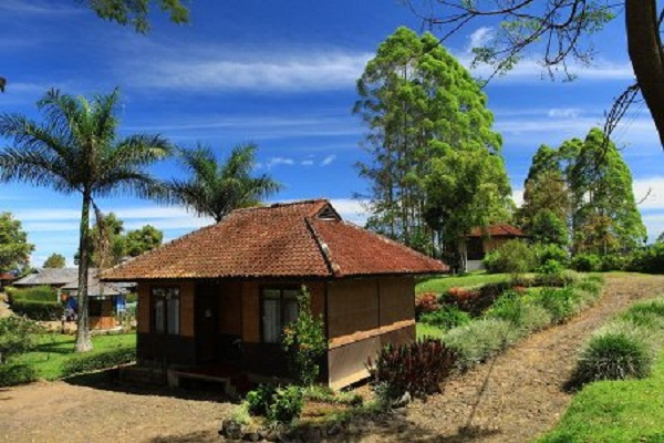 Nikmati Suasana Puncak Agrowisata Gunung Mas Merahputih Agro Kab Bogor