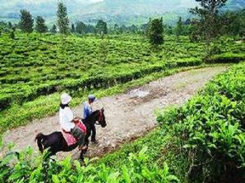 Rencana Wisata Website Berbagi Informasi Kuliner Seni Budaya Agrowisata Gunung