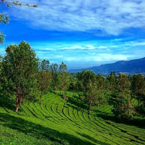 Selow Banget Spot Nyantai Bogor Pas Buat Liburan Agrowisata Gunung