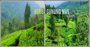 Tempat Wisata Bogor Populer Dikunjungi Berlokasi Jalan Raya Puncak Cisarua