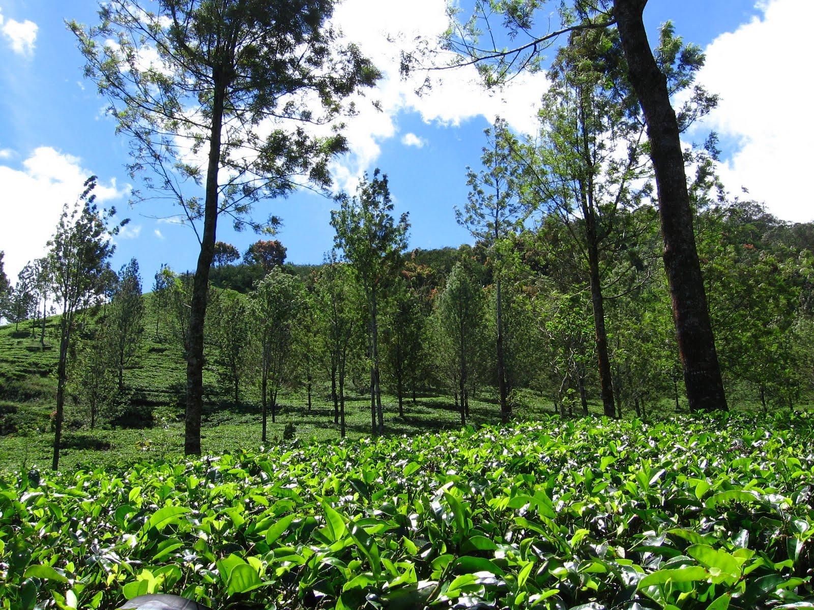 Wisata Alam Bogor Limakaki 8 Rekomendasi Agro Gunung Mas Kab