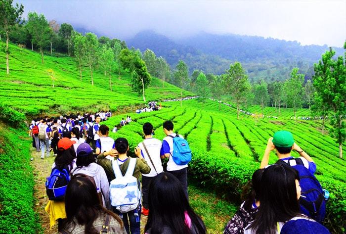 Wisata Puncak Bogor Menarik Populer Agro Gunung Mas Kab
