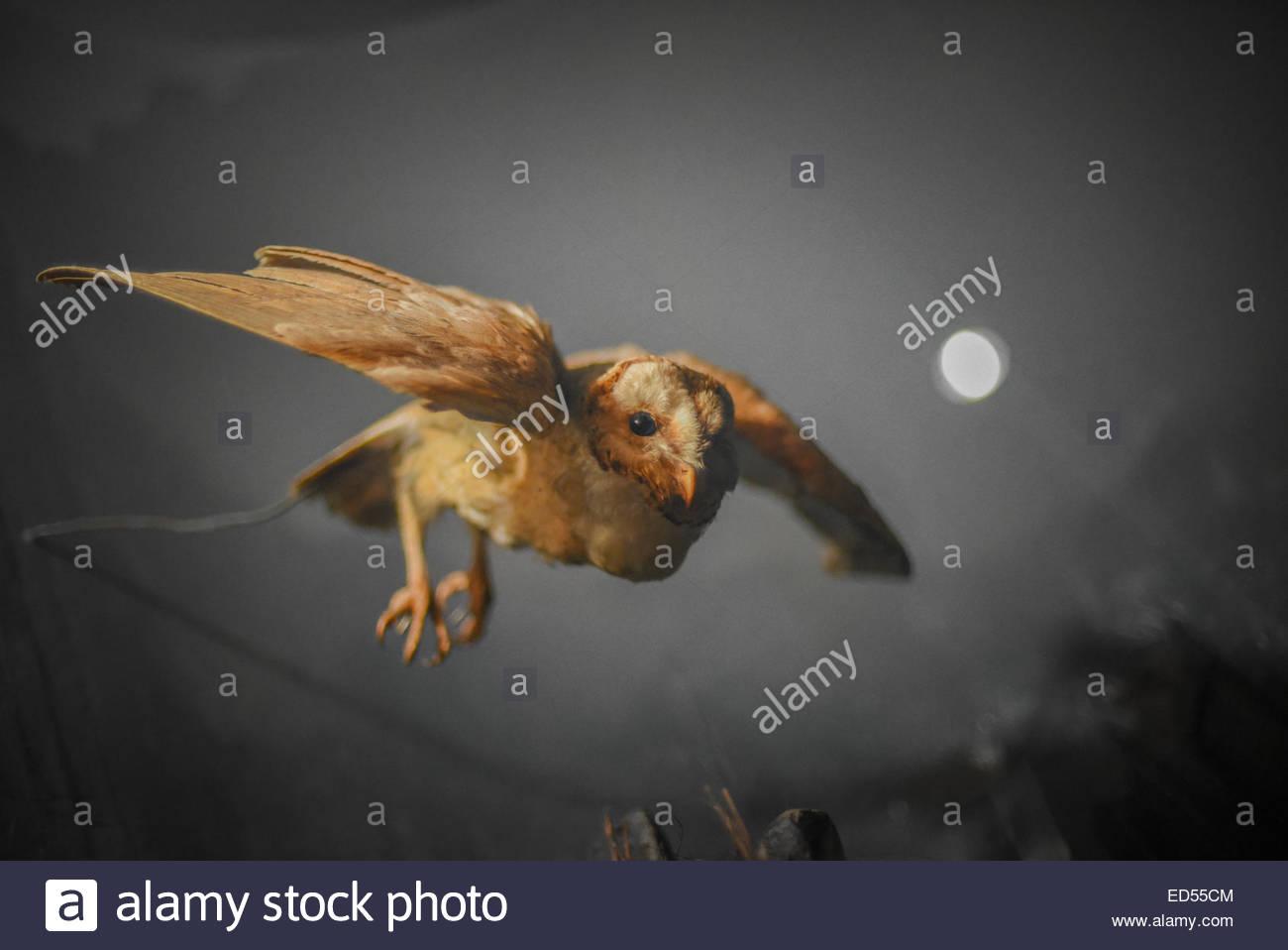 Bogor Indonesia Stock Photos Images Alamy Barn Owl Tyto Alba