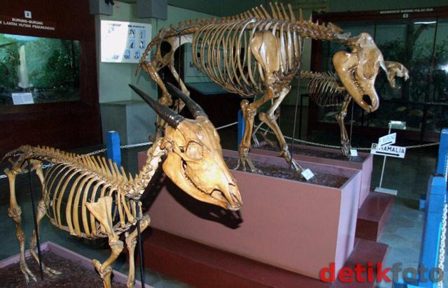 Mari Berkunjung Museum Zoologi Bogor Smp 1 Babadan Ponorogo Zoology