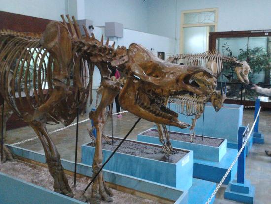 Museum Zoologi Bogor Traveling Anisa Tabani Koleksi Ilmiah Dimiliki Meliputi