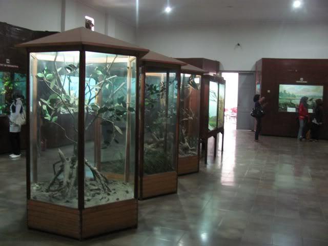 Paus Raksasa Museum Zoologi Bogor Koleksi Burung Zoology Kab