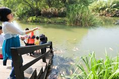 Danau Dora Bogor Jawa Barat Jalan Pinterest Eco Park Central