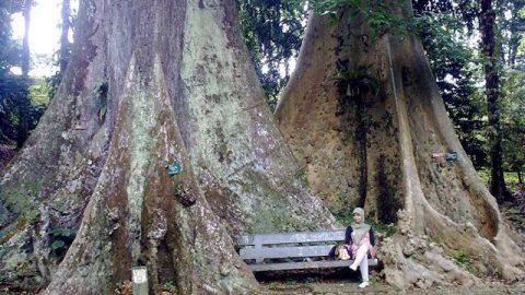 3 Taman Bogor Asik Buat Jogging Refreshing Tempat Enteng Jodoh