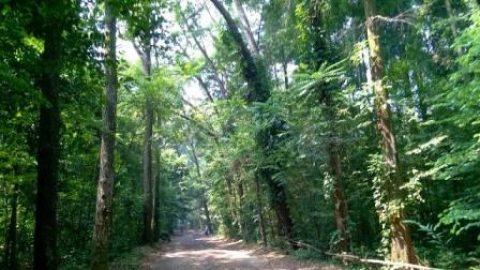 5 Tempat Wisata Beda Bogor Warung Misterius Hutan Cifor Alam