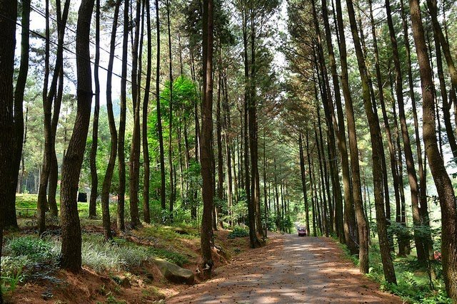7 Tempat Wisata Bogor Yg Mungkin Ente Kunjungi Cool Kaskus