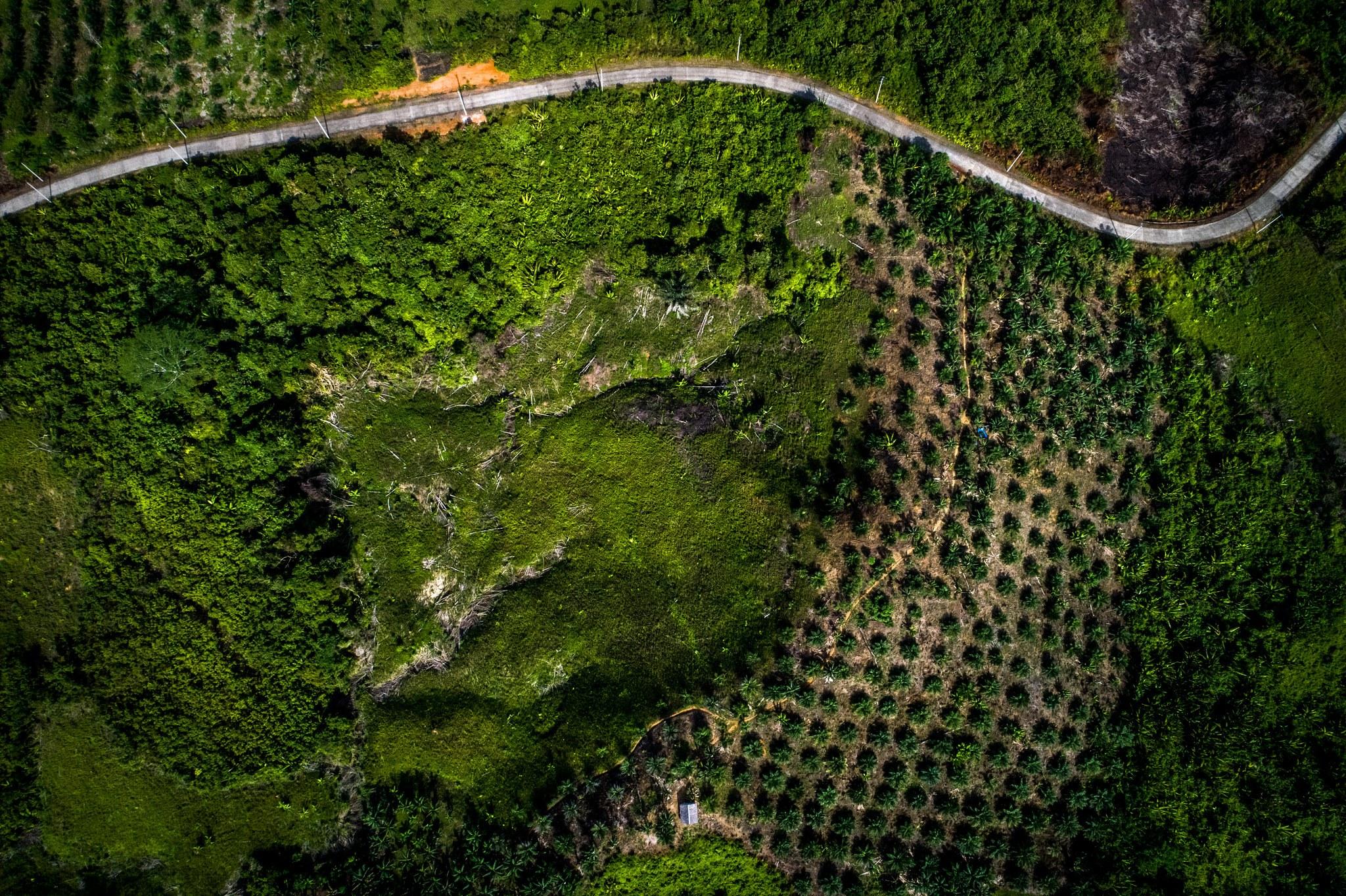 Bentang Alam Kelapa Sawit Permainan Indonesia Cifor Forests News Hutan