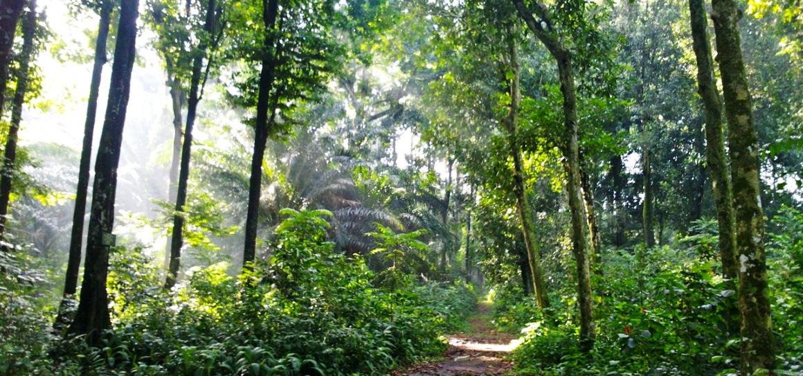 Bogor 10 Lokasi Uji Nyali Hutan Cifor Kab