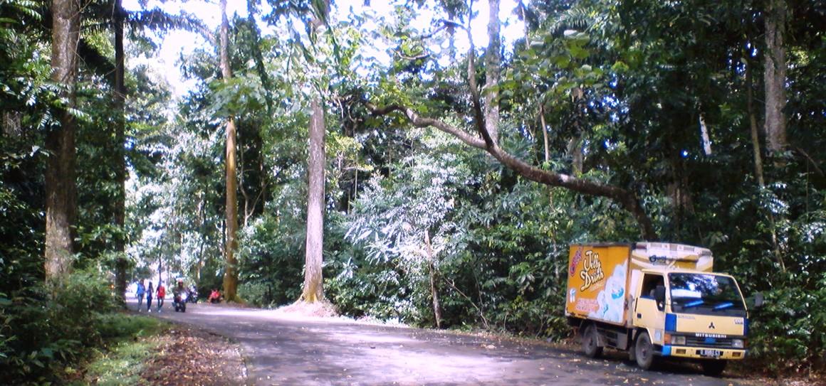 Bogor 10 Lokasi Uji Nyali Jalan Masuk Menuju Hutan Cifor