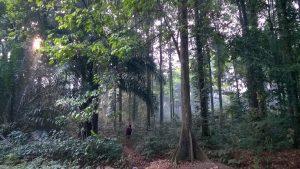 Bukan Kebun Raya Obyek Wisata Bogor Ternyata Hutan Buatan Cifor