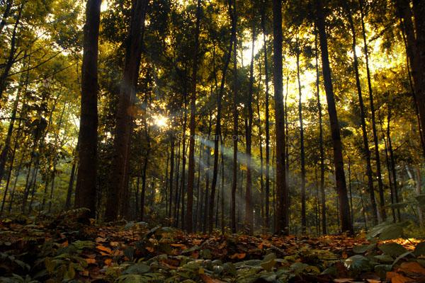 Cifor 1 Galeribogor Net Hutan Kab Bogor