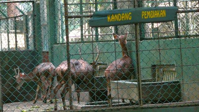 Cifor Setu Gede Bogor Jawa Barat Hutan Penelitian Dramaga Berada