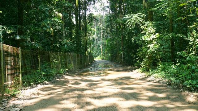 Cifor Setu Gede Bogor Jawa Barat Kondisi Sunyi Hutan Penelitian