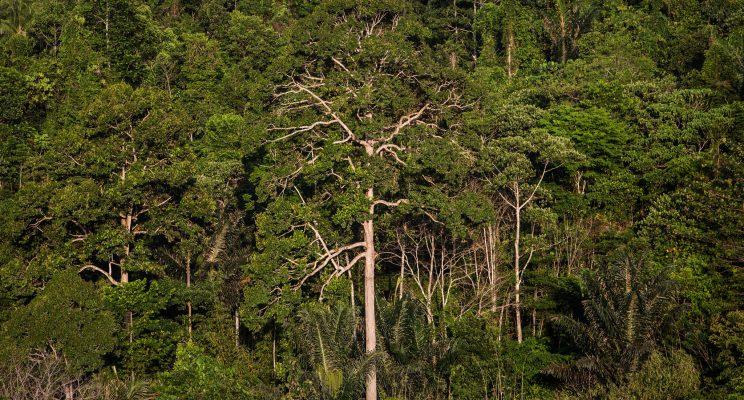 Laporan Khusus Cop23 Bagaimana Lahan Hutan Membantu Mencapai Tujuan Iklim
