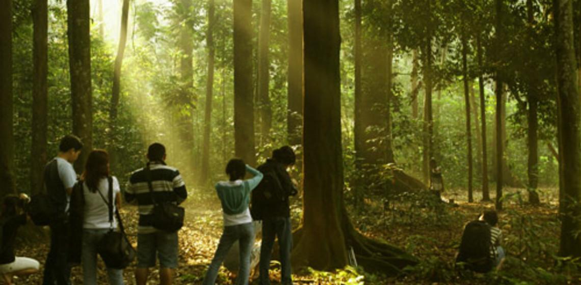 Melihat Semburat Cahaya Mengagumkan Hutan Cifor Ulinulin Kab Bogor