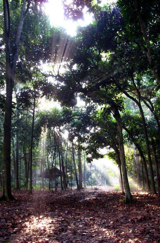 Melihat Semburat Cahaya Mengagumkan Hutan Cifor Ulinulin Sumber Gambar 2