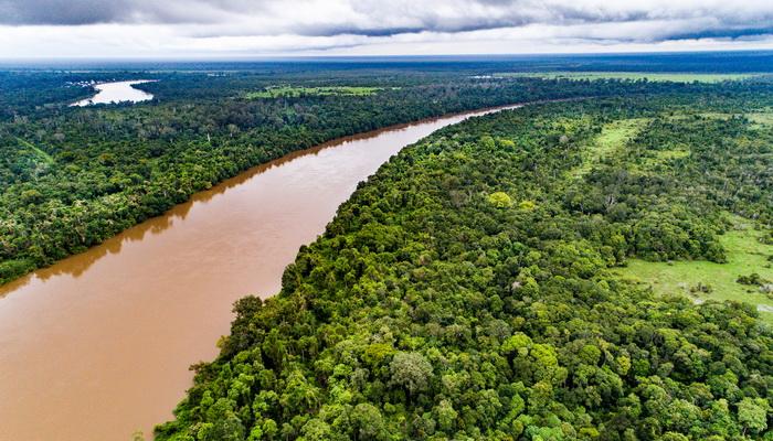 Pemulihan Kerusakan Hutan Gambut Perlu Didukung Ilmu Pengetahuan Kalimantan Foto