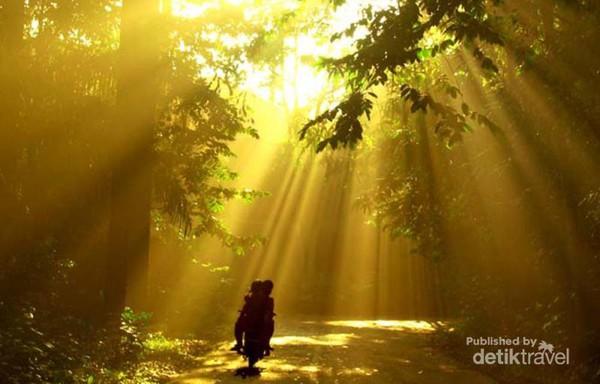 Siapa Sangka Hutan Sekeren Bogor Melintas Semburat Cahaya Pagi Melalui