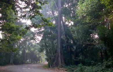 Tak Krb Hutan Cifor Bogor Pun Menjadi Tempat Angker Berikutnya