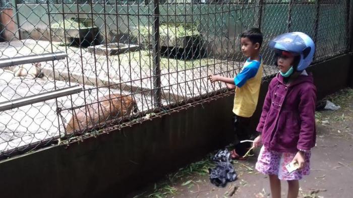 Yuk Lihat Penangkaran Rusa Hutan Cifor Bogor Tribunnewsbogor Ardhi Sanjaya
