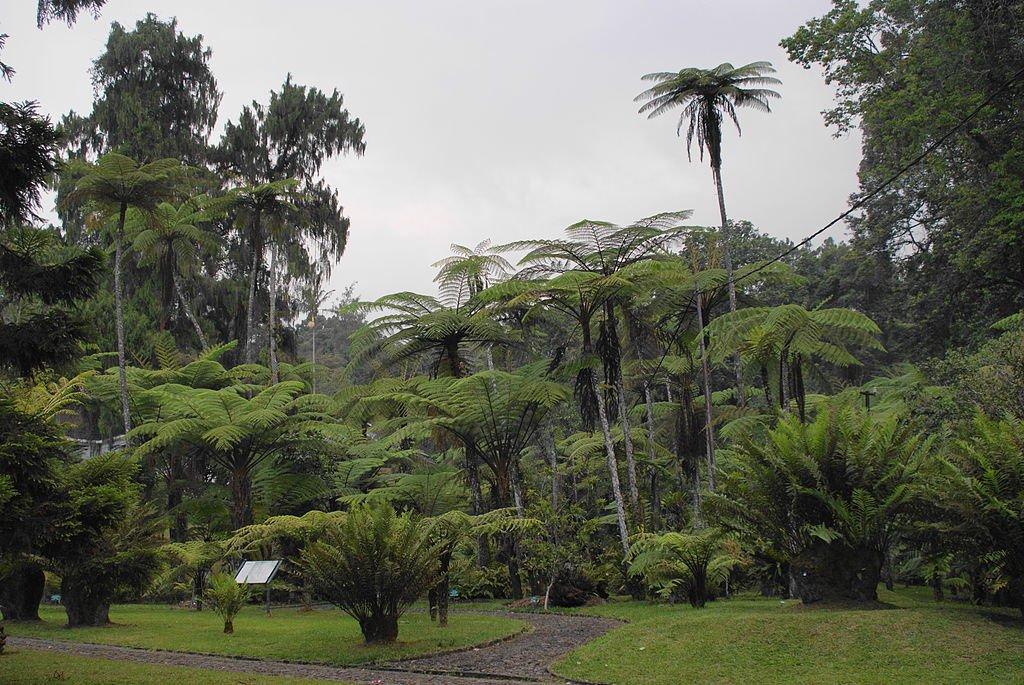 10 Puncak Indonesia Trip101 3 Quiet Time Nature Cibodas Botanical