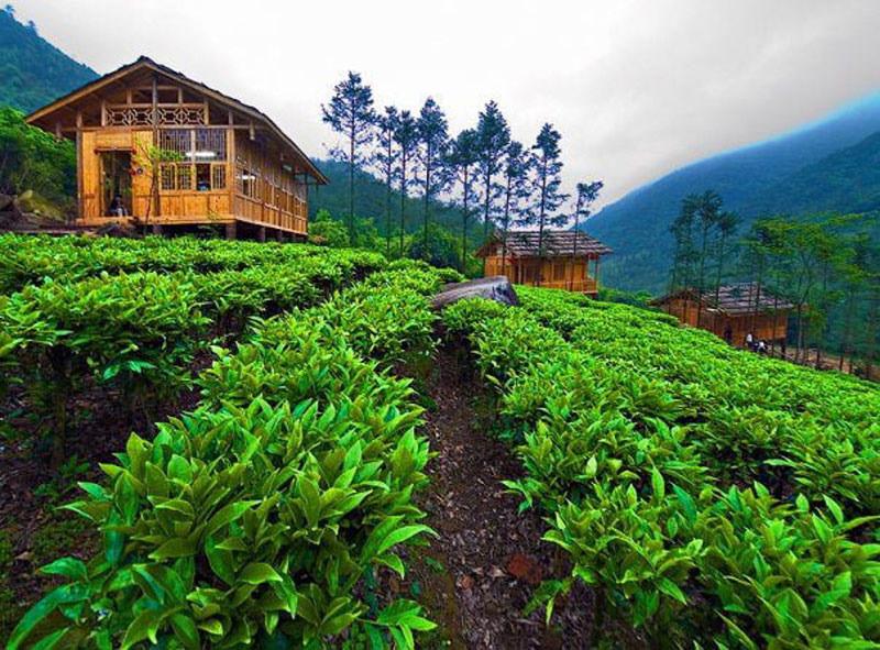 33 Extraordinary Bogor Puncak Knew Existed Gunung Mas Tea Estate