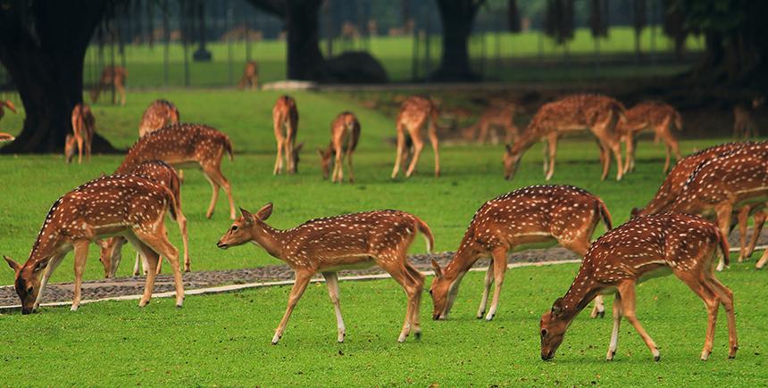 Exploring Great Outdoors Bogor Indonesia Waytogo Deer Grounds Istana Fly