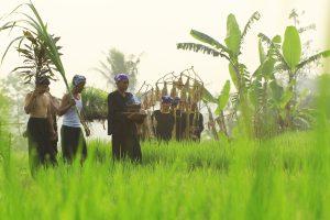 Kampung Budaya Sindang Barang Hayukabogor Sindangbarang Terletak Desa Pasir Eurih