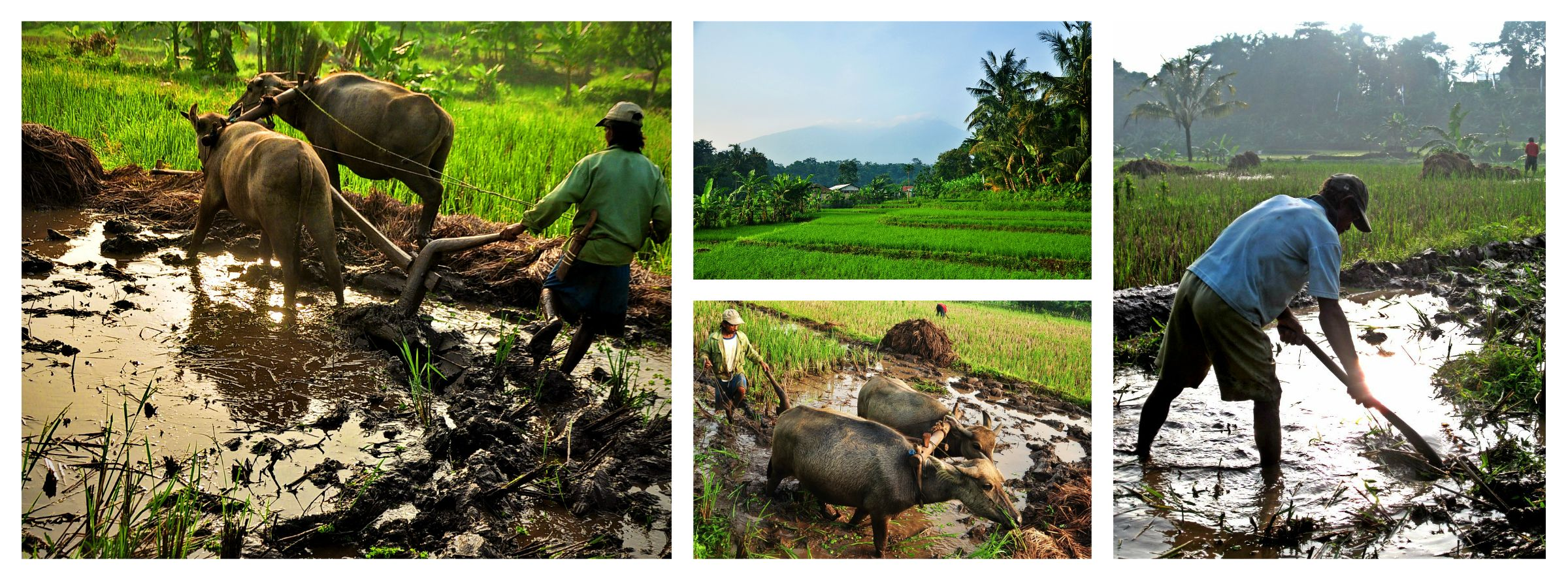 Kampung Budaya Sindang Barang Love Nature Culture Aktivitas Pagi Sindangbarang