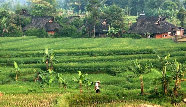Kampung Budaya Sindangbarang Adat Urug Bogor Agama Rumah Hasil Rekonstruksi