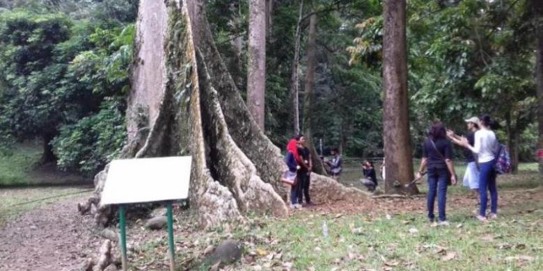 Angin Kencang Kebun Raya Bogor Tutup Kompas Kab