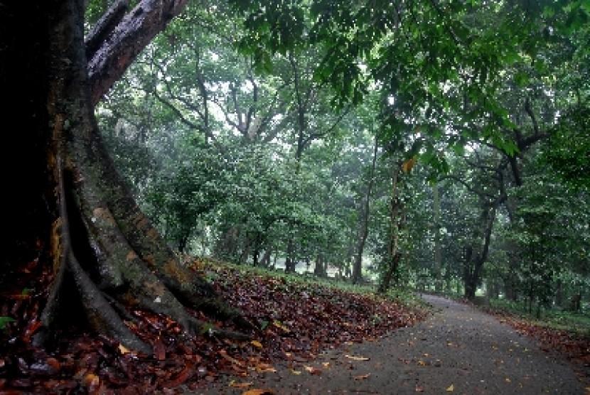 Angin Kencang Kebun Raya Bogor Tutup Republika Online Suasana Kab