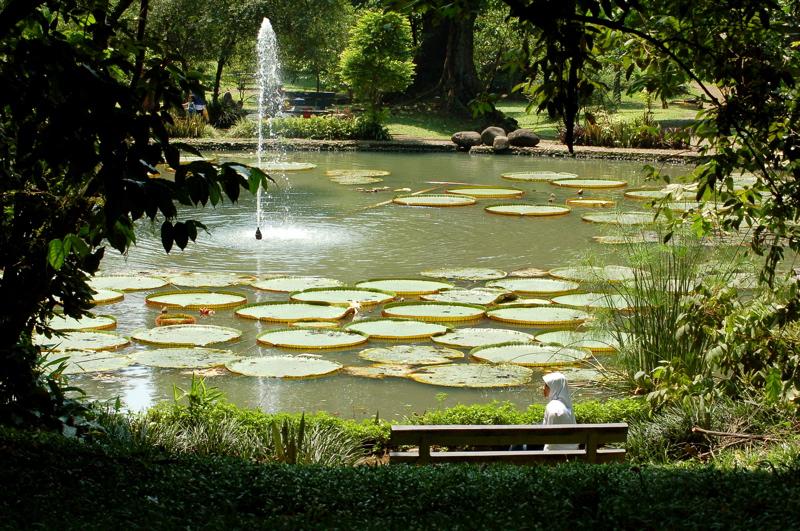 Bogor Wikipedia Lily Pond Botanical Garden Kebun Raya Kab