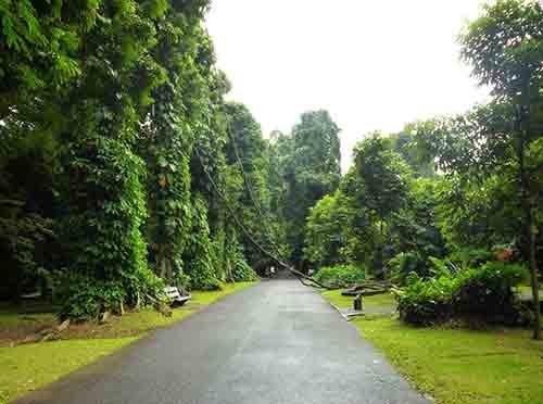 Daftar 23 Tempat Wisata Bogor Sekitarnya Indah Kebun Raya Kab
