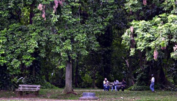 Insiden Kebun Raya Bogor Sebab Dilarang Paku Pohon Metro Tempo