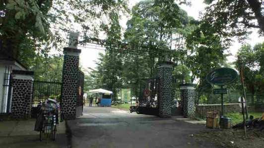 Kabupaten Ngada Pemerintah Rencana Bangun Kebun Raya Wolobobo Foto Bogor