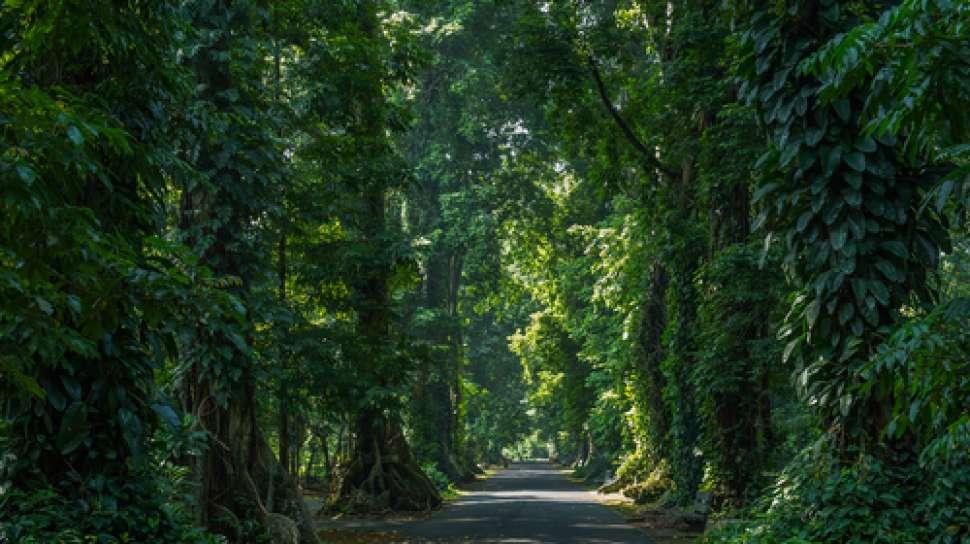 Keselamatan Pengunjung Kebun Raya Bogor Ditutup Foto Thetanjungpuratimes Manajemen Lipi