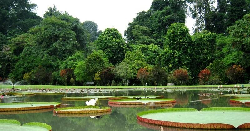 Tahu Berapa Usia Kebun Raya Bogor Nih Krb Memasuki 200