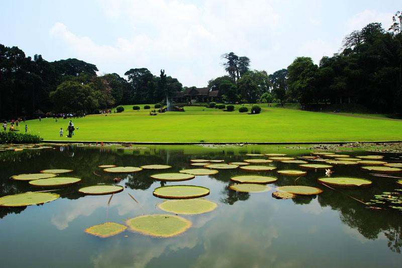 Taman Akuatik Destinasi Kebun Raya Bogor Merahputih Kab