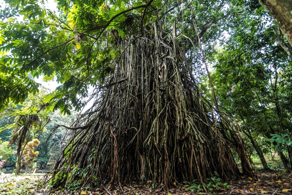 West Java Inckebun Raya Bogor Kebun Kota 11 Kab