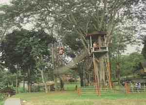 Kebun Durian Warso Potlot Adventure Wisata Pasirmukti Kab Bogor