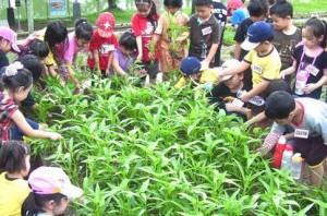 Kebun Wisata Pasirmukti Rekomendasi Bogor Kiostravel Kab